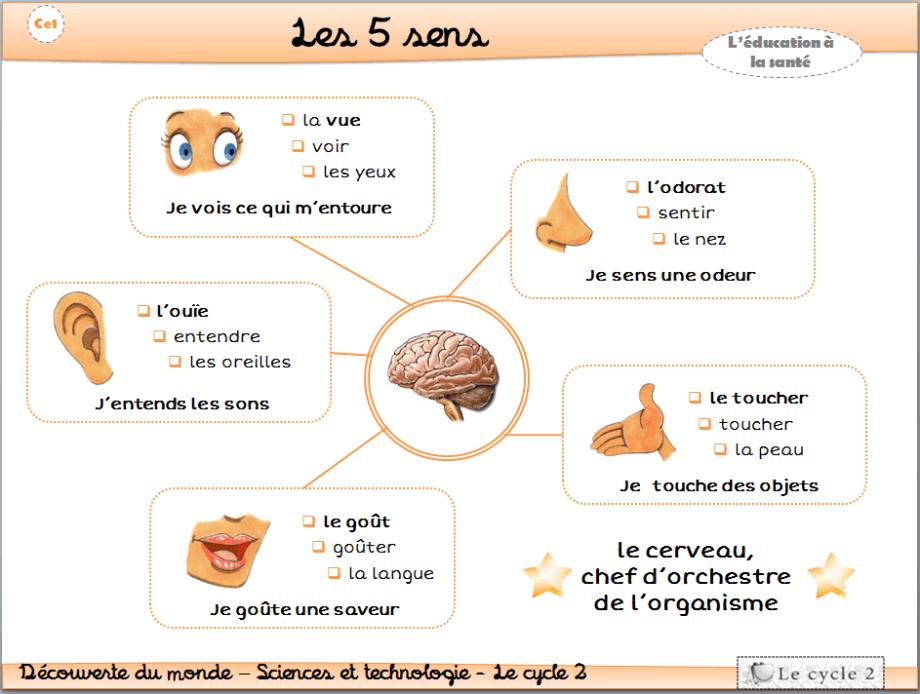 les-5-sens-vue-ouie-odorat-gout-toucher-cp-ce1-cycle-2-trace-ecrite-lecon-1