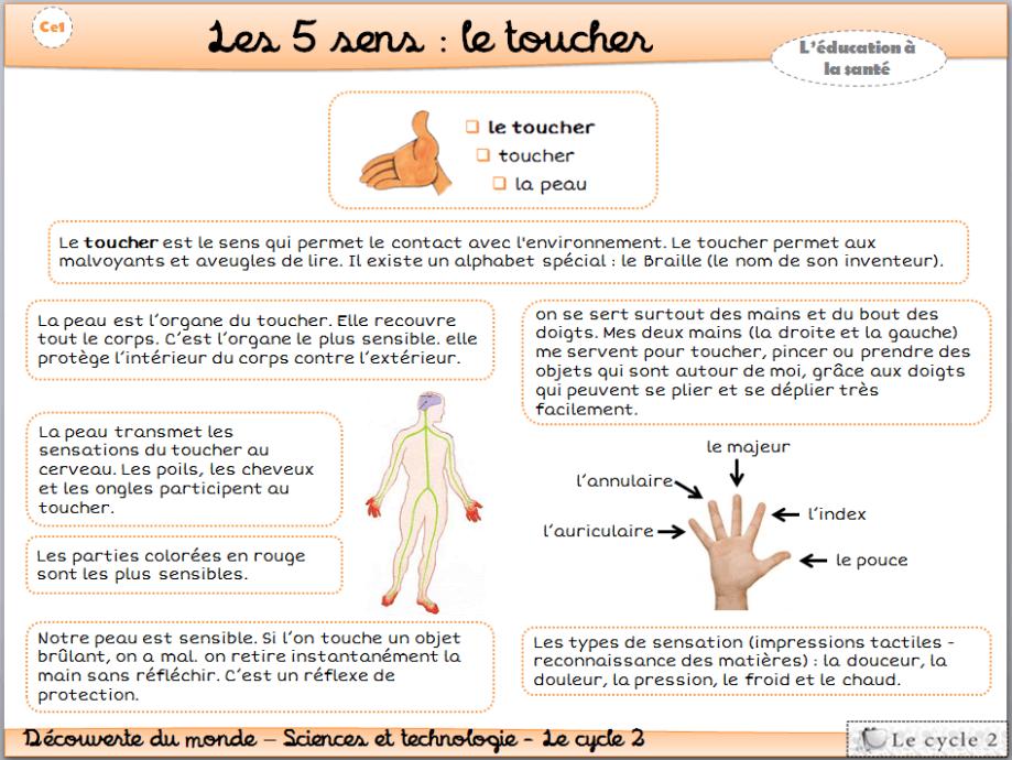 les-5-sens-vue-ouie-odorat-gout-toucher-cp-ce1-cycle-2-trace-ecrite-lecon-fiche-le-toucher-1