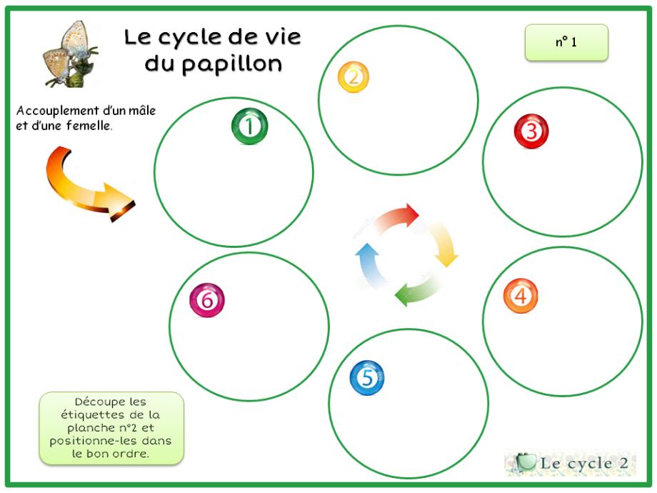 exercice-cycle-de-vie-du-papillon-ce1-ce2
