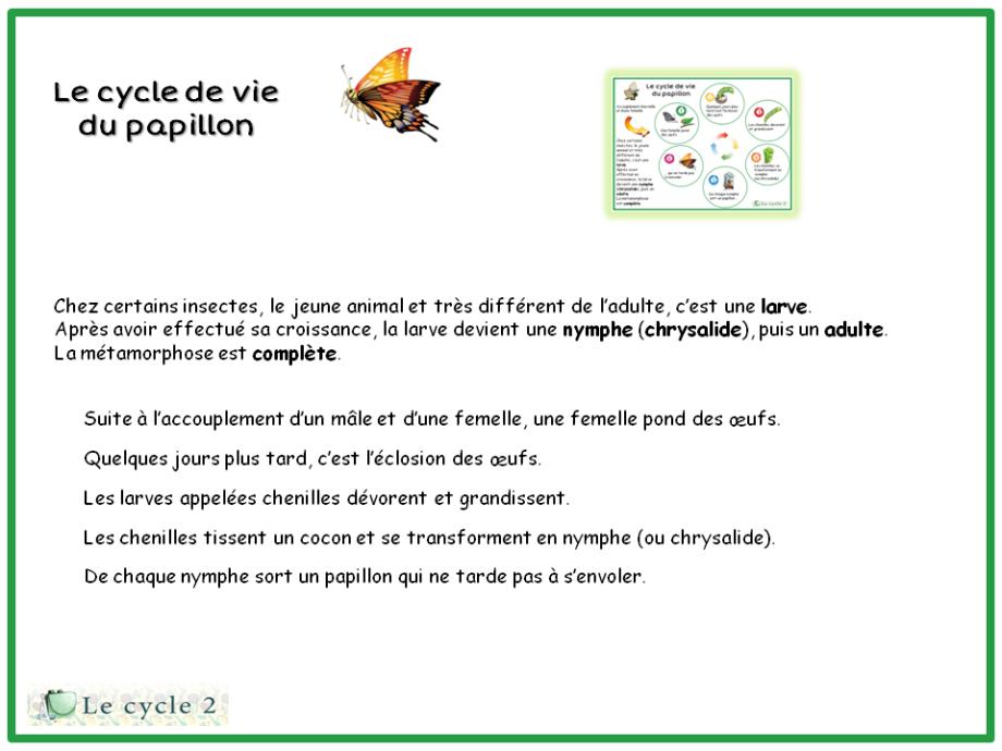 lecon-trace-ecrite-le-cycle-de-vie-papillon-ce1-ce2