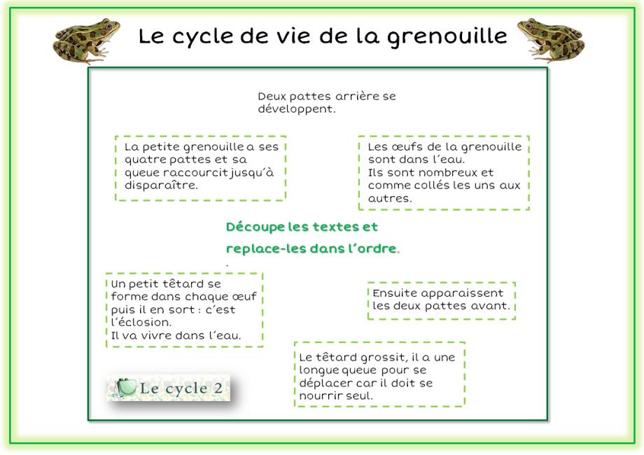 exercice-lecon-sur-le-developpement-de-la-grenouille-ce1-ce2-replace-les-textes-dans-l-ordre