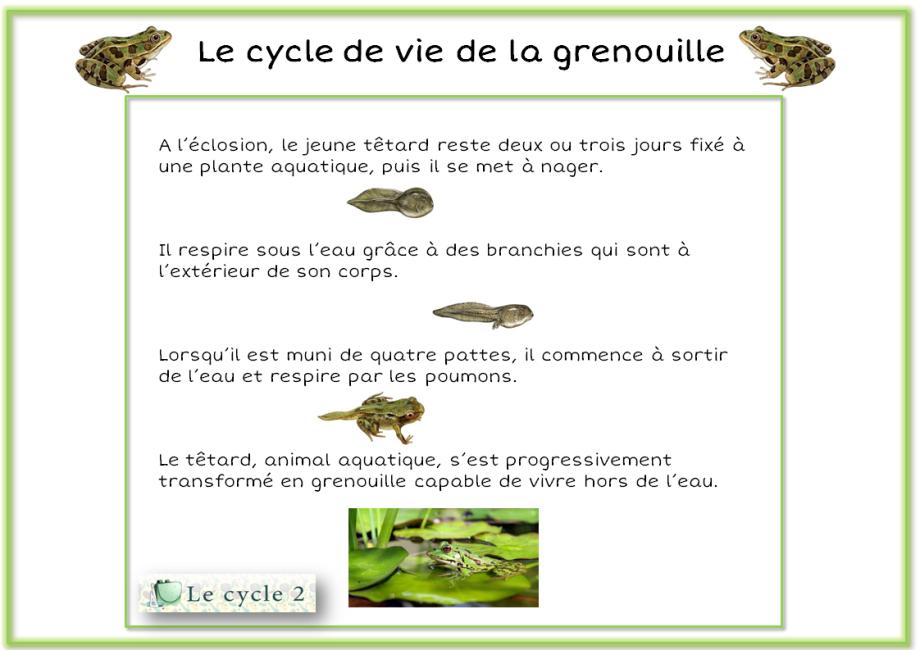 econ-trace-ecrite-sur-la-metamorphose-de-la-grenouille-ce1-ce2-cycle2